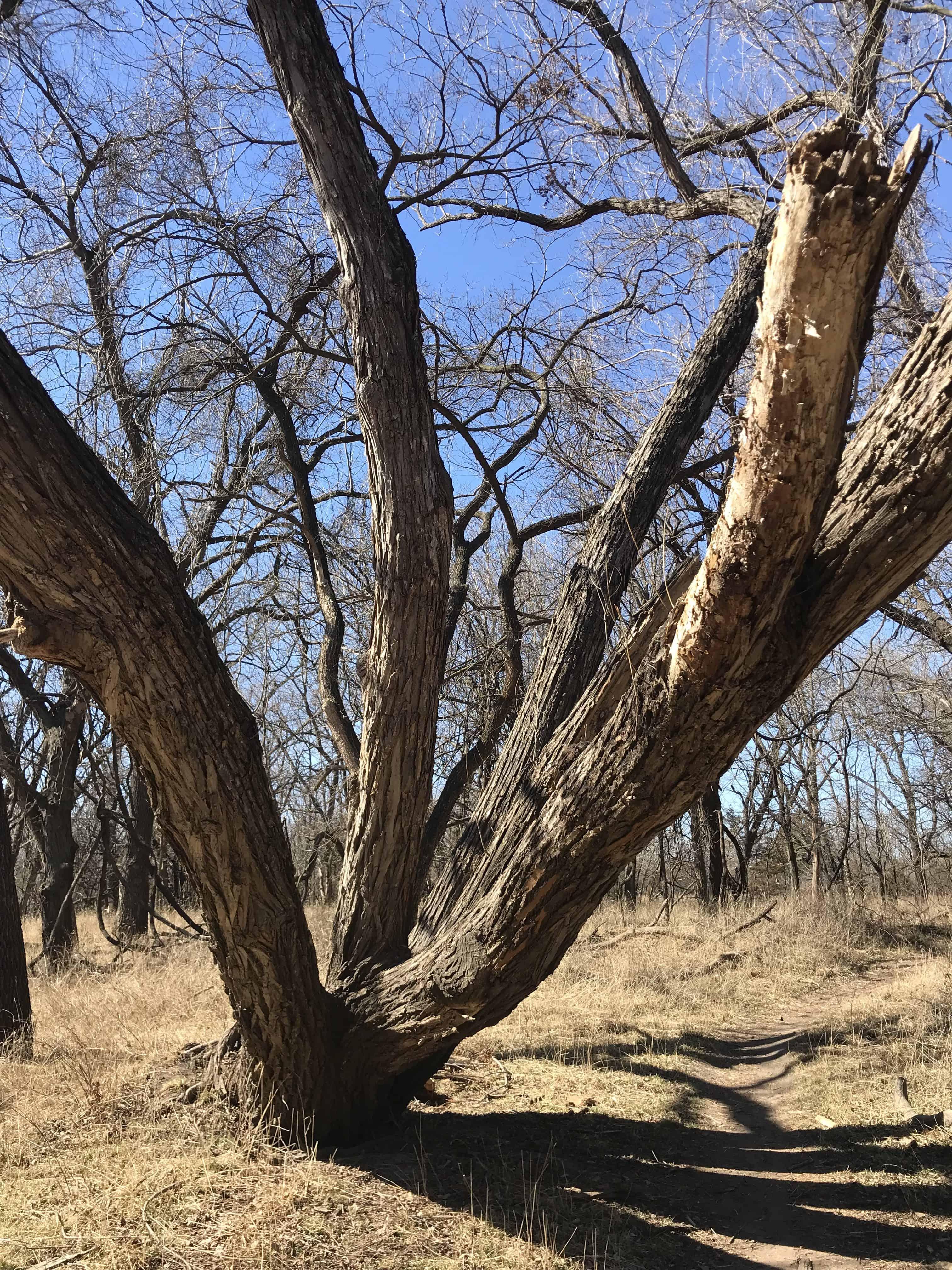 How to spend a day in Wichita. Visiting Pawnee Prairie Park in Wichita, Kansas