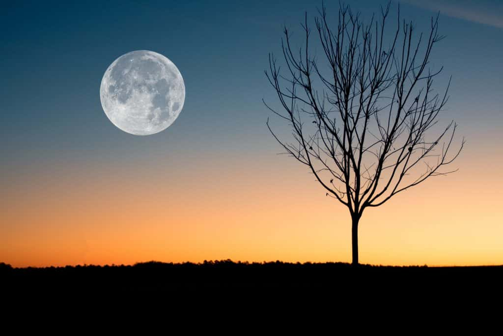 Align Your Intention Setting with the Seasons and Moon – A New Way to Plan Your Year